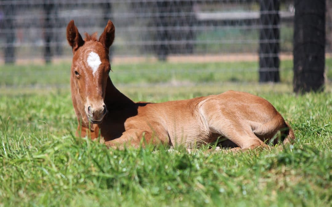Generous Nature Foals Half-Sister to Addictive Nature at Sledmere
